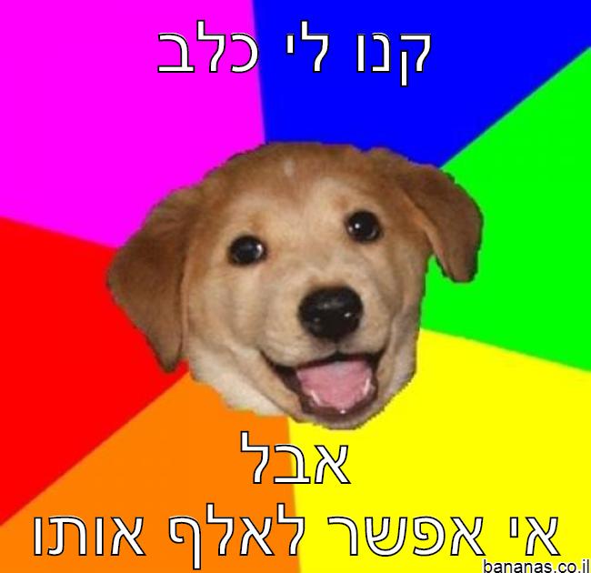 כלב בלי אילוף