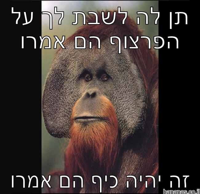 קוף מצחיק