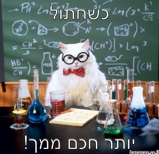 חתול חכם!